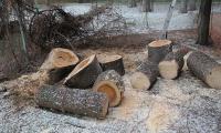 <h2>Удаление деревьев фото</h2>
