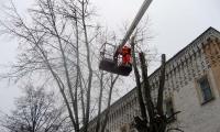 <h2>Санитарная обрезка деревьев</h2>
