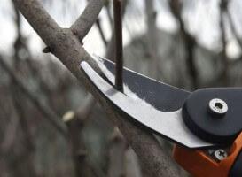 Обрезка плодовых деревьев специалистами