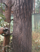 Способы удаления деревьев
