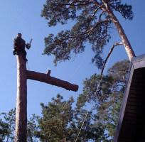 Спуск частей дерева на веревках