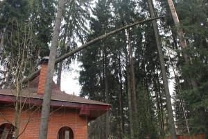 Удаление аварийного дерева упавшего на здание