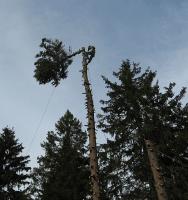 Удаление дерева в Подмосковье