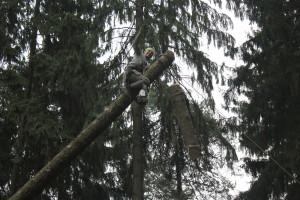 Удаление дерева в аварийном состояние