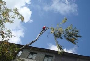 Кронирование дерева