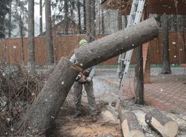Вырубка дерева по частям