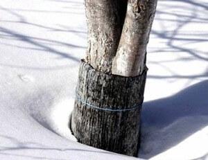 Защита деревьев на зиму