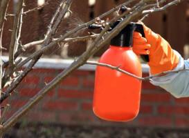 Защита плодового дерева