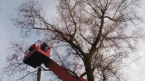 Обрезка больших деревьев с вышке
