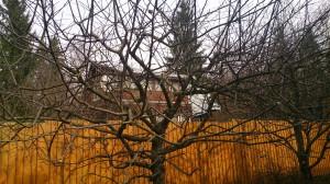 Обрезка плодовых деревьев осенью или весной