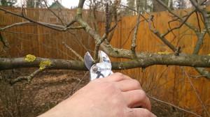 Проведение весенний обрезки яблонь