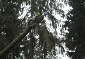 Спил деревьев с вывешиванием частей
