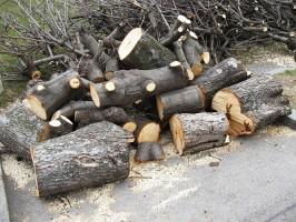 Дерево распилено на чурбаки