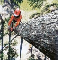 Услуги по вырубке деревьев специалистами