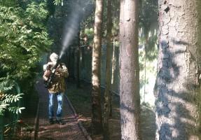 Обработка и защита еловых деревьев
