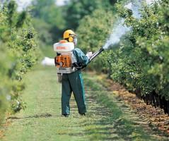 Опрыскивание деревьев от короеда