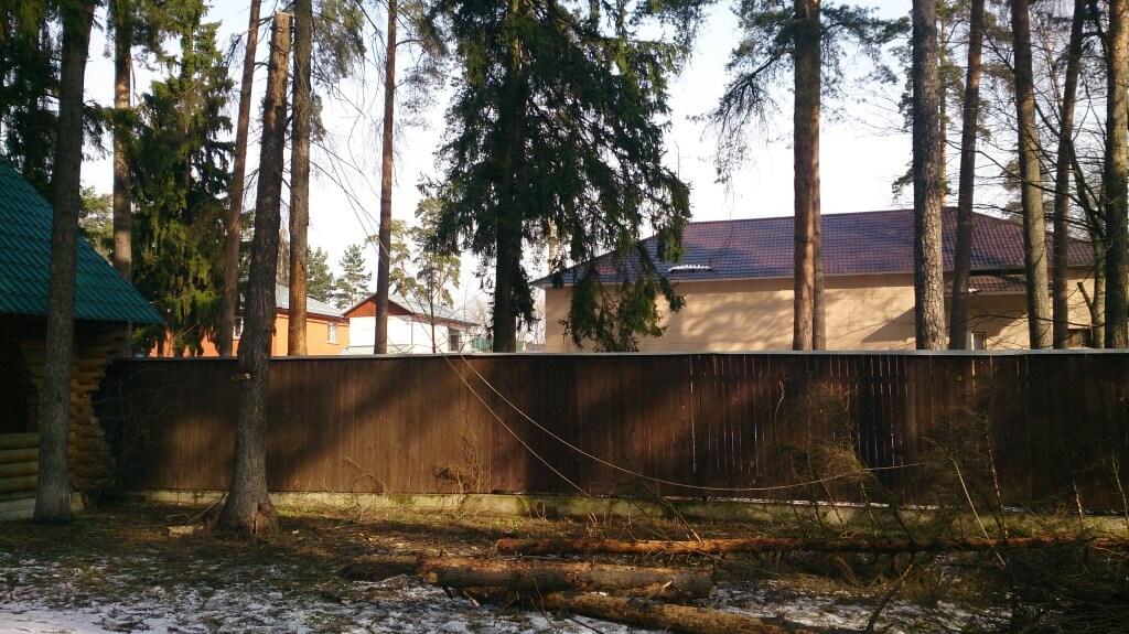 Вырубка сухого дерева во дворе