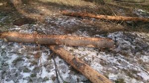 Вырубка сухостойного дерева