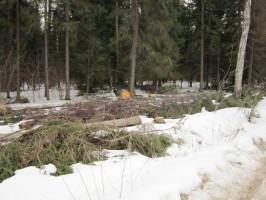 Подряд на вырубку леса