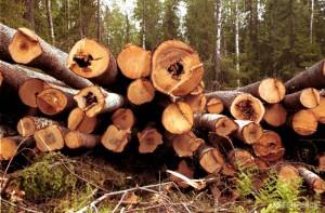 Работа по вырубке леса