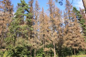 Расценки на санитарную вырубку леса