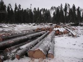 этапы расчистки территории земельного участка от деревьев под строительство и цены