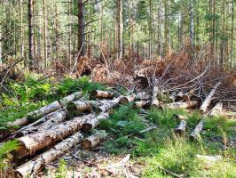 Расчистка территории земельного участка от деревьев под строительство цена