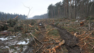 Вырубка леса под объекты строительства
