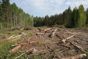 Вырубка участков леса