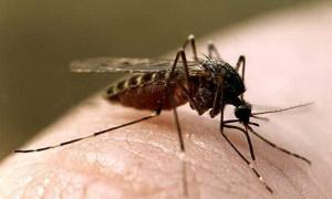 Борьба с комарами в помещении