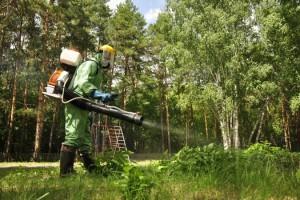 Как избавиться от клещей на дачном участке