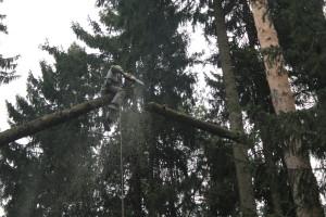 Способы удаления крупных деревьев по частям