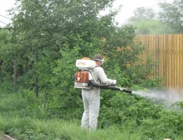 Уничтожение паутинного клеща