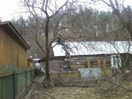 Обрезка старых садовых деревьев осенью