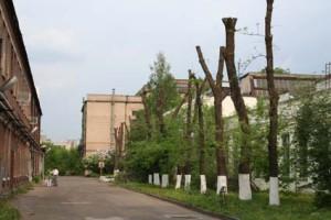 Сезонная санитарная обрезка городских деревьев