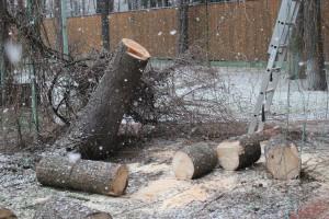 Спил деревьев в Люберцах