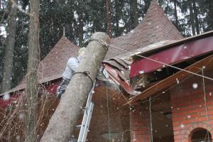 Спил деревьев в Люберецком районе