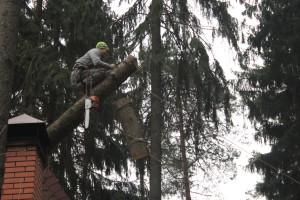 Удаление деревьев в Люберецком районе