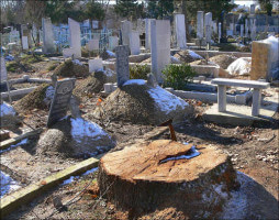 Удаляемый пень стоящий на кладбище