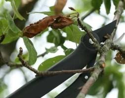 Уход и подрезка плодово-фруктовых деревьев