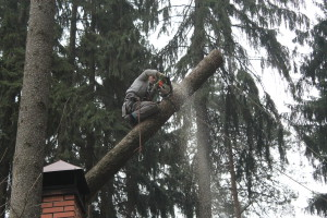 Вырубка деревьев в Люберецком районе