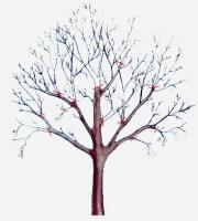Подрезка плодово-фруктовых деревьев