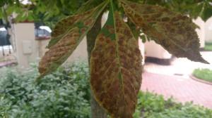 Лечение деревьев в Раменском райне