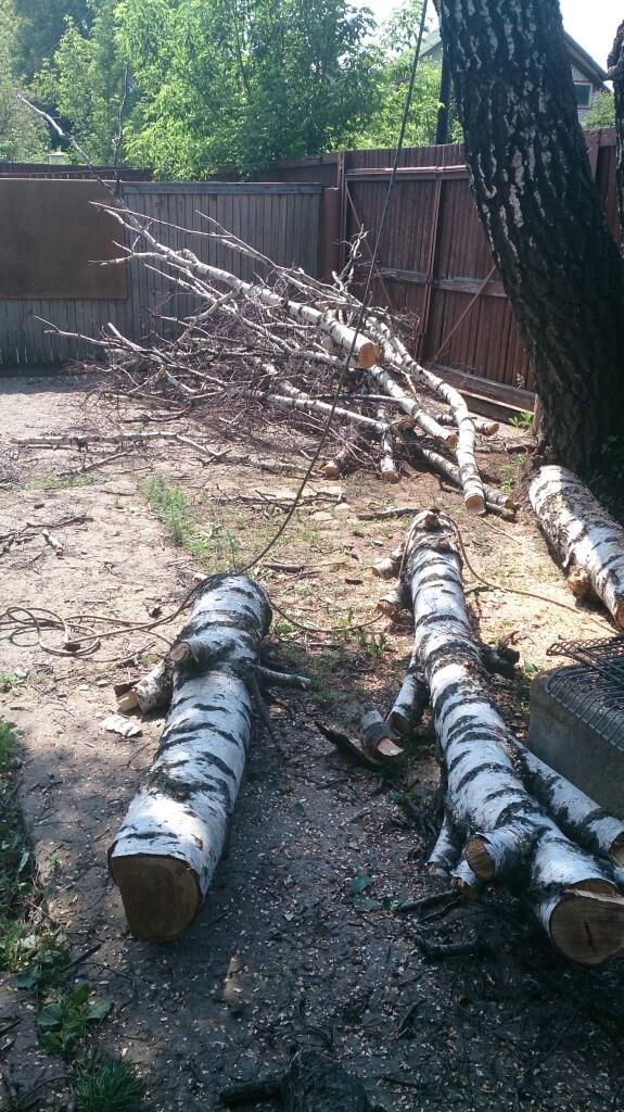 вырубка деревьев на собственном земельном участке