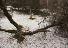 Признаки для сруба фруктового дерева