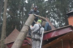 Работы по удалению деревьев в Бронницах