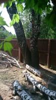 Срубить дерево на участке