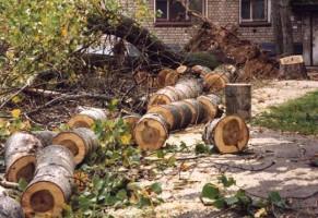 Срубить дерево в Москве