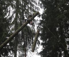 Срубить дерево в Москве вместе с Нами