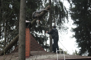 Удаление деревьев Электросталь